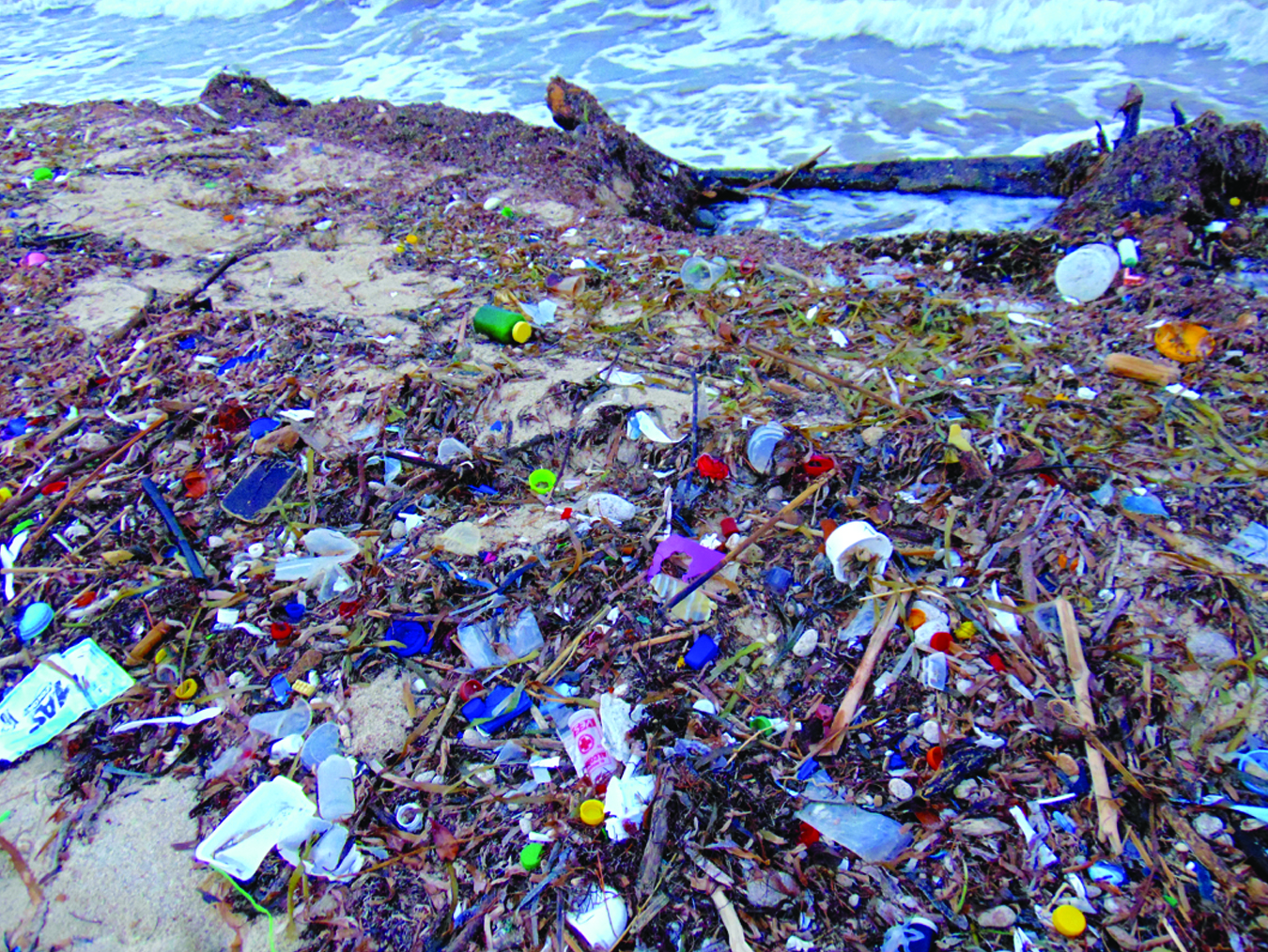 Plastics washing up along the shoreline, southern Belize. Photo by Amy Moran-Thomas.