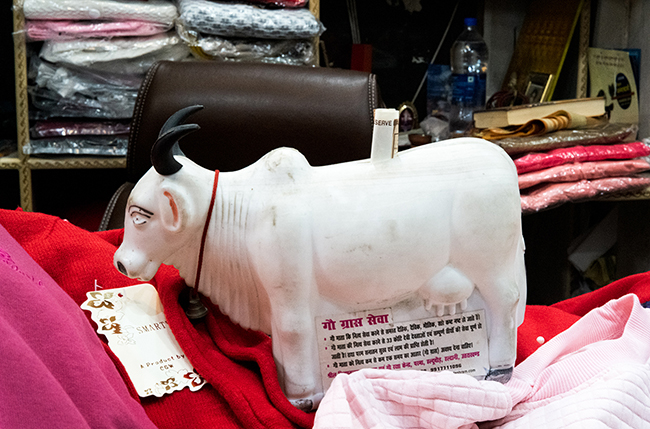 """""""Cow banks"""" requesting donations to buy food for cows. Photos by Radhika Govindrajan."""